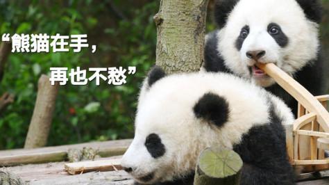 中国移动咪咕携手pandapia,推出全球首个大熊猫粉丝俱乐部